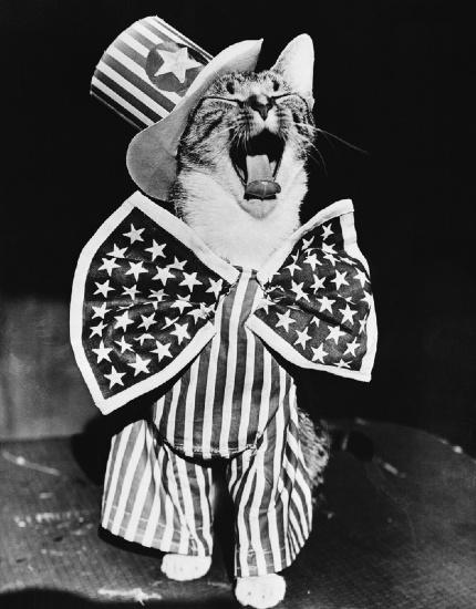 PatrioticCat