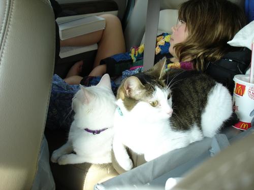 Kittenstravelling3