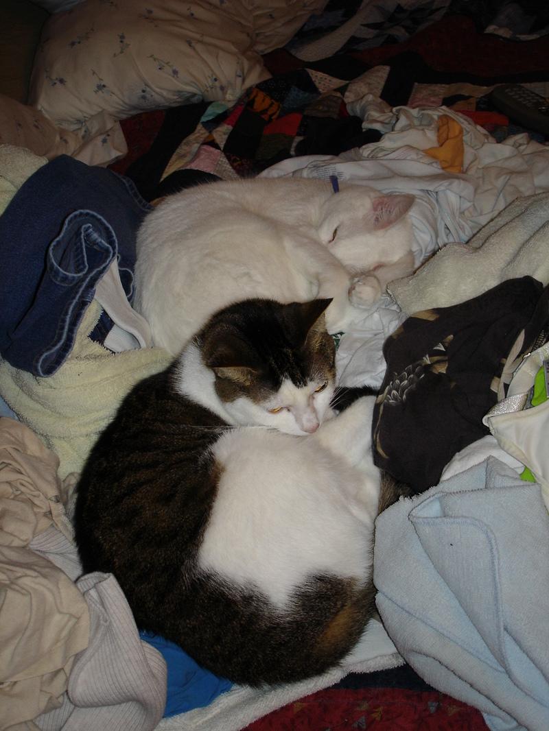 Kittenslovelaundry