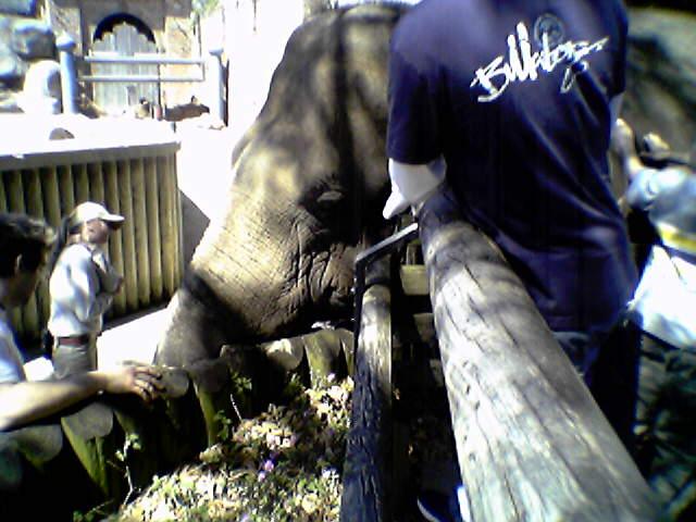 Pat the elephant